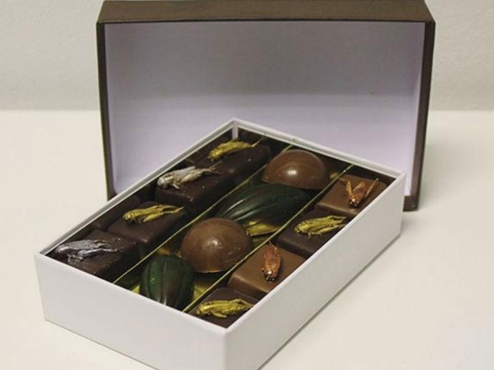 Chocolates com sabor a insetos (Foto: Reprodução/Micronutris)