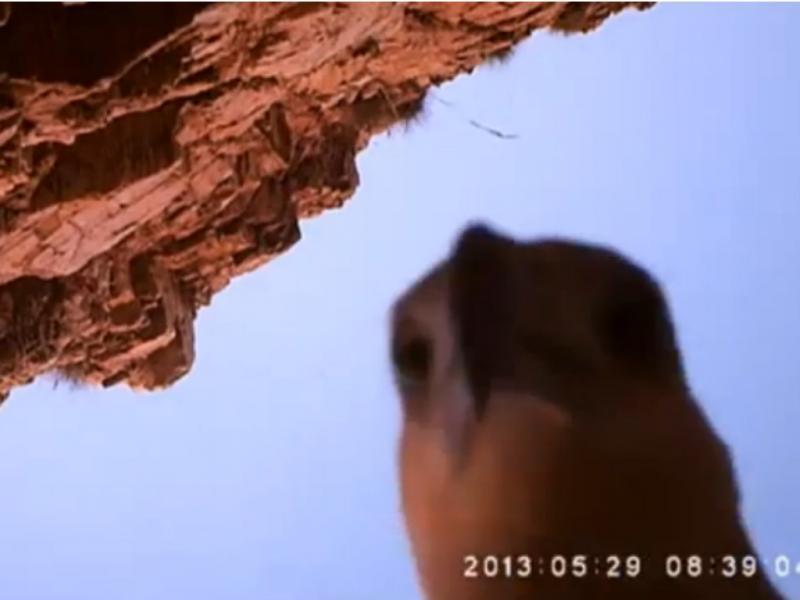 Águia pescadora rouba câmara (Reprodução / Youtube / WorldSkyNews)