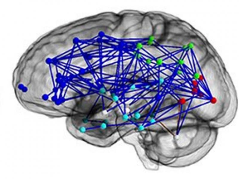 Cérebro do homem (Reprodução / National Academy of Sciences/PA)