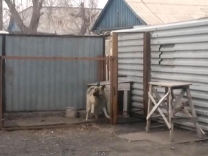 Cão dança ao som de música dos anos 80 (Foto: Reprodução/YouTube)