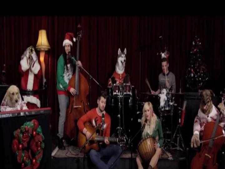 Cães tocam música de Natal (Foto: Reprodução/YouTube)