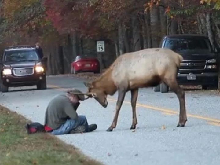 Vídeo mostra rena a atacar fotógrafo em parque nos Estados Unidos (Foto:Reprodução/YouTube)