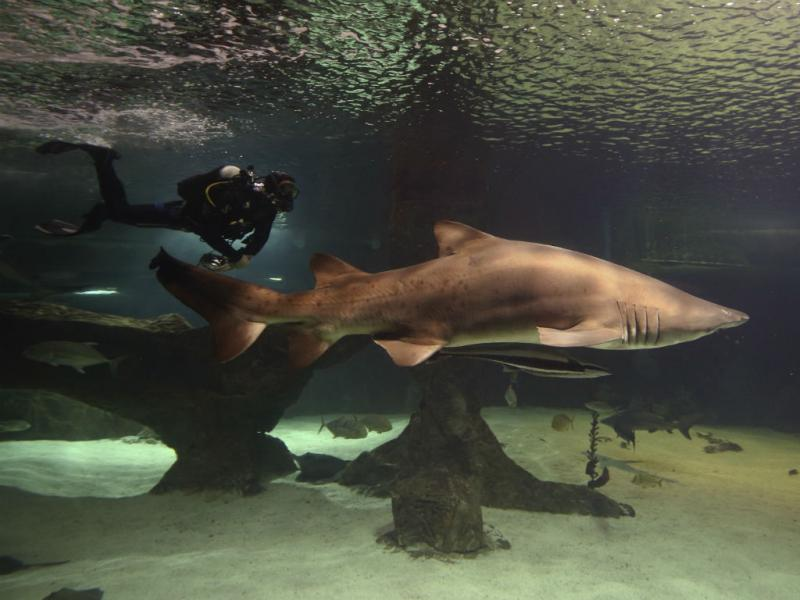 Tubarão (Reuters)