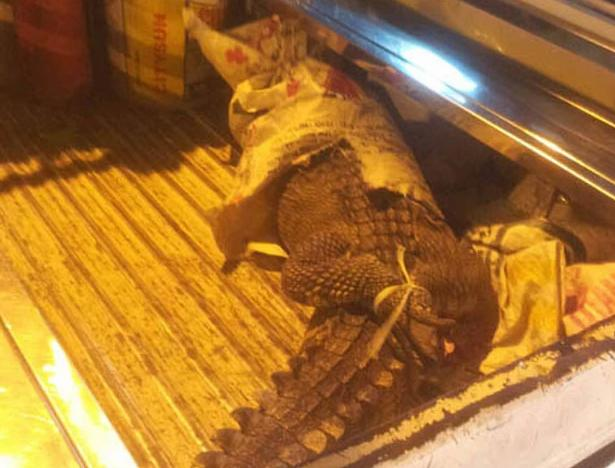 Crocodilo cai de autocarro no Vietname (Reprodução / Divulgação / TPHCM)
