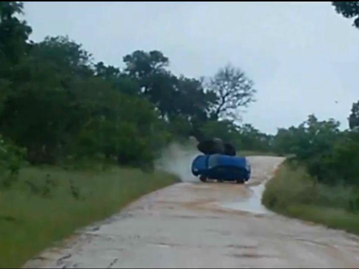 Elefante abalroa carro no Kruger