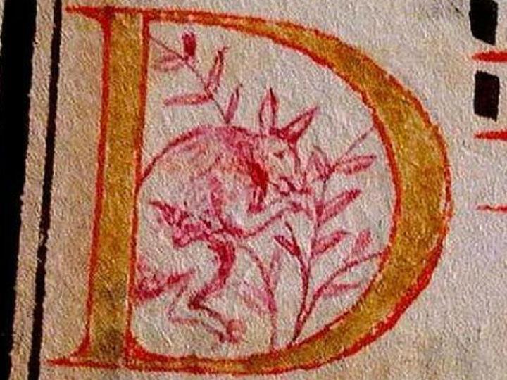 Canguru em manuscrito português do século XVI