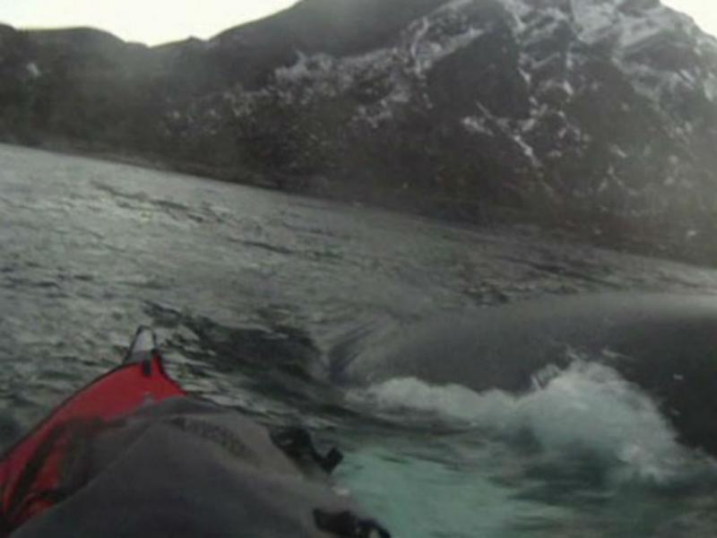 Homem num caiaque escapa por pouco de baleia (Reprodução Youtube)