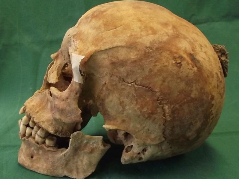 Esqueleto de Alfredo, o Grande, de Inglaterra (EPA/LUSA)
