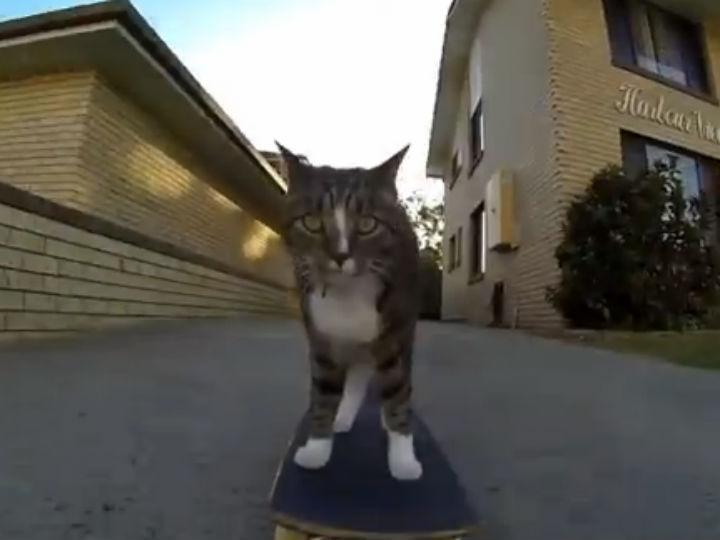Vídeo mostra gato a andar de skate (Foto:Reprodução/YouTube)