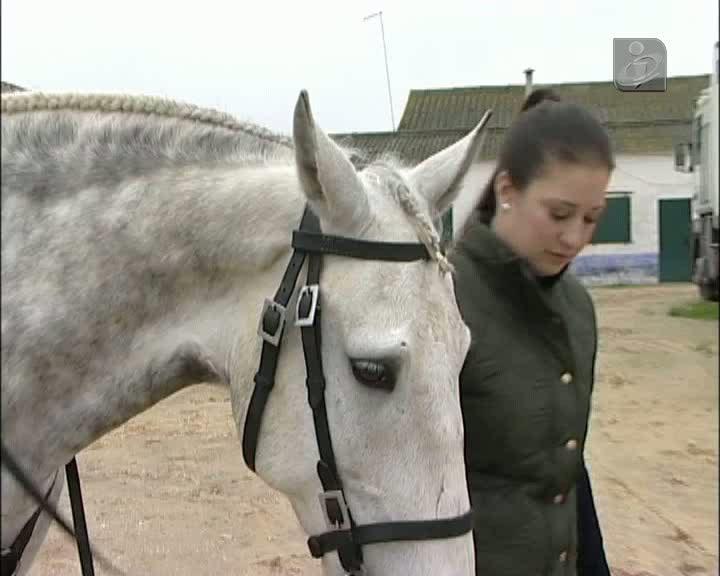 Cavaleira Ana Rita de regresso aos treinos