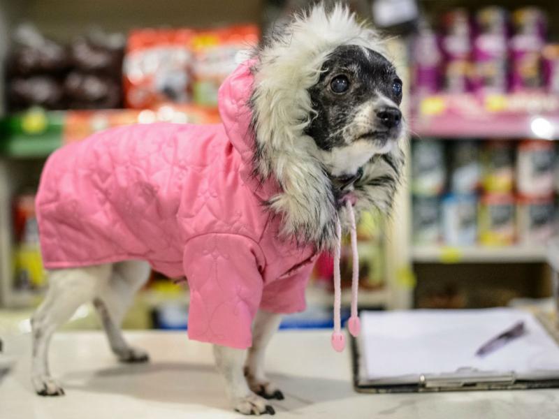 Cães não resistem ao frio nem à moda (EPA/LUSA)