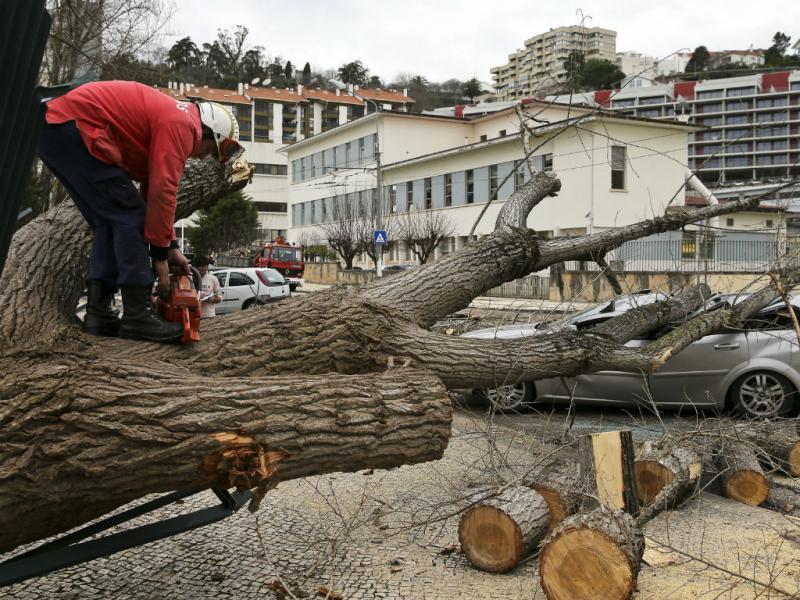 Árvore atinge sete carros em Coimbra (LUSA)