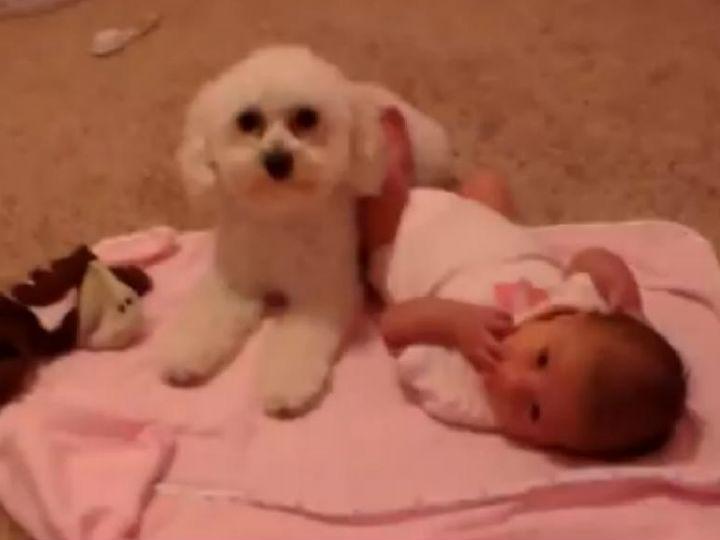 Cão protege bebé de todos os perigos (YouTube)