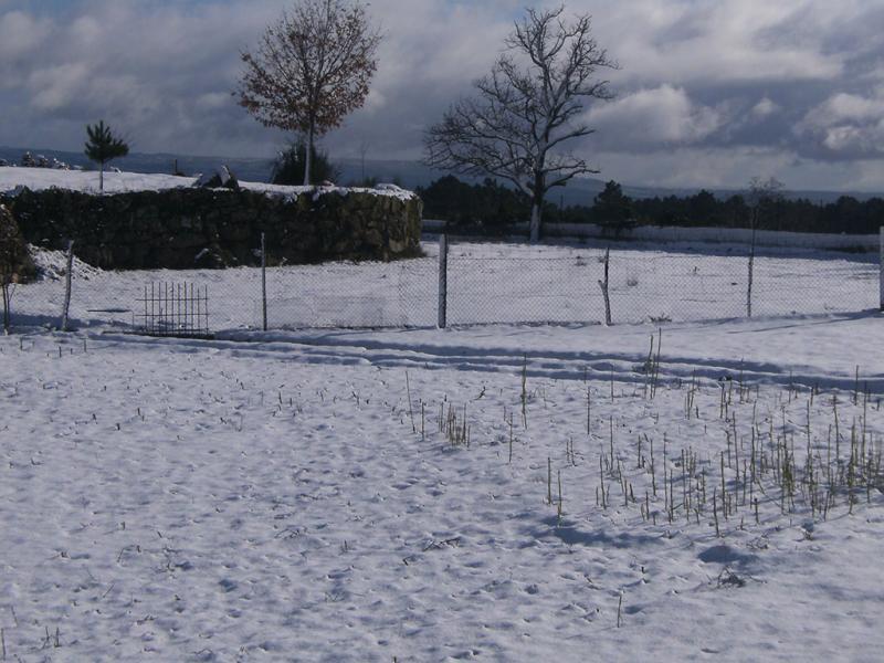 Neve em Vila Real (euvi@tvi.pt)