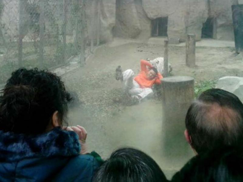 Homem lança-se aos tigres em zoo na China (REUTERS)