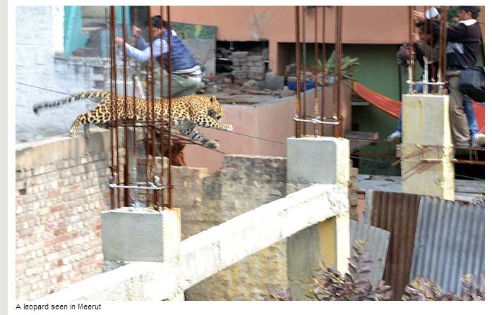 Leopardo a causar o medo junto da população (Hindustan Times)