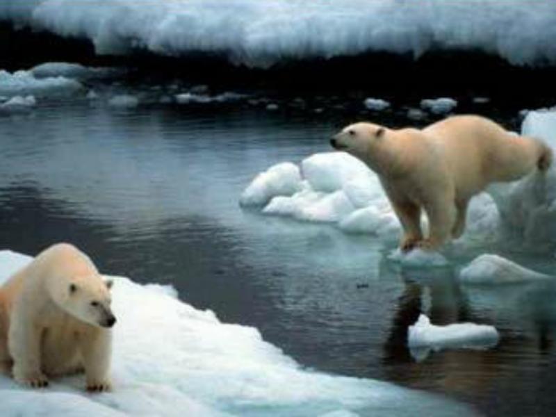 Origem do aquecimento não será responsabilidade humana(reprodução de greenpeace)