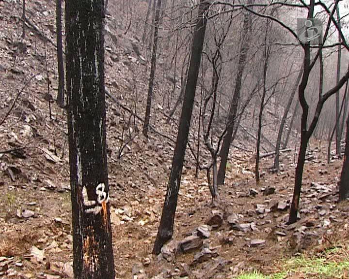 Famílias das vítimas dos fogos descrentes na Justiça