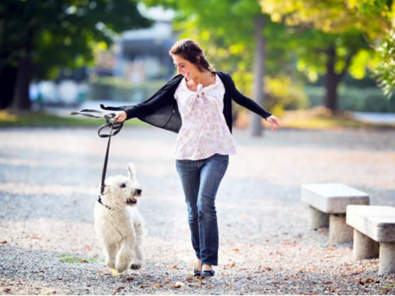 Cães não poderão andar à solta pelas ruas de Barcelona