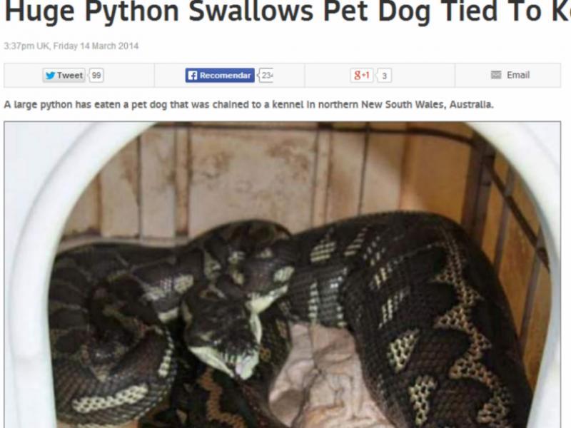 Piton come cão acorrentado em quintal (Reprodução / SkyNews/ Wires)