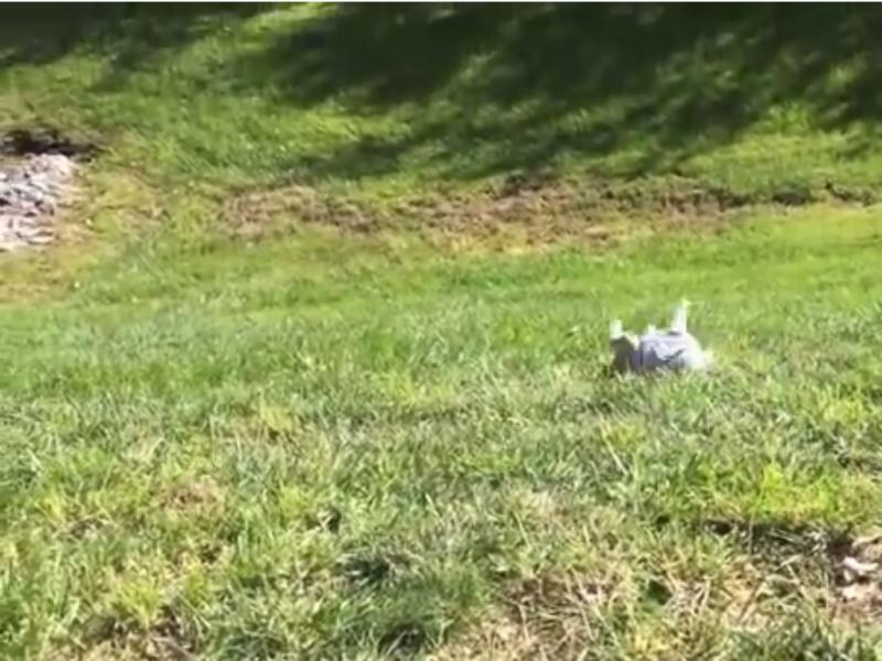 Sophie a rodar pela colina abaixo