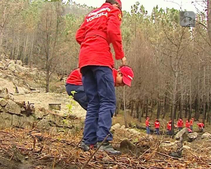 Voluntários plantam 10 mil árvores para recuperar o que o fogo consumiu