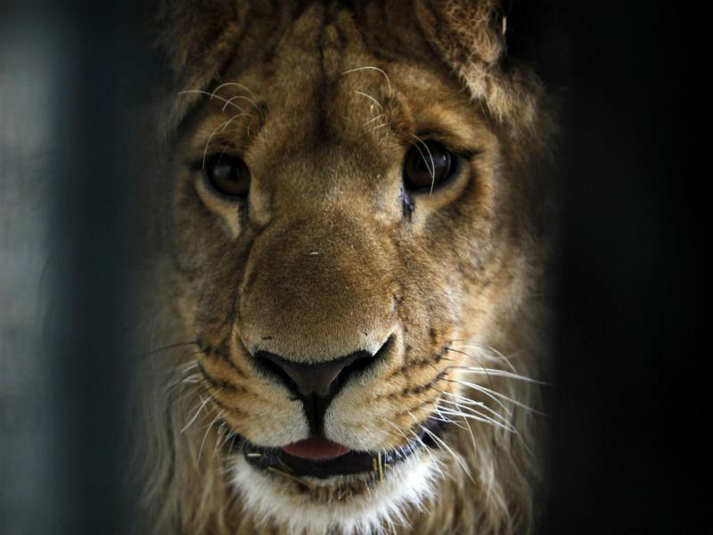 Leão (REUTERS)