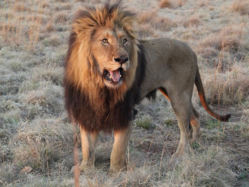 Fotogaleria do Filme «Safari em África»