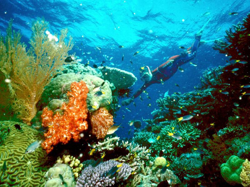 Grande Barreira de Corais, Austrália [Reuters]