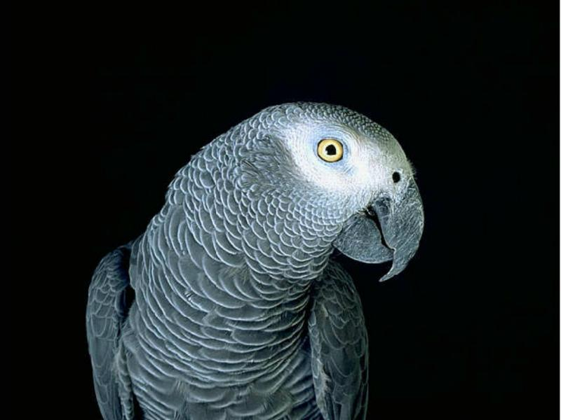 Papagaio impediu que dona fosse assaltada