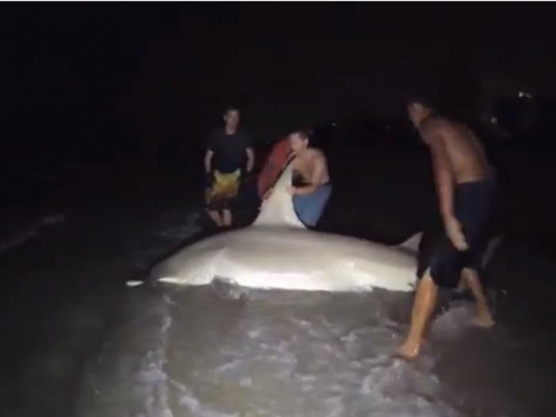 Estudantes pescaram tubarão martelo de 4,2 metros (Foto reprodução de YouTube)