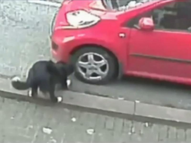Cão destrói pneus de carros estacionados (Reprodução / Youtube / Skendong)