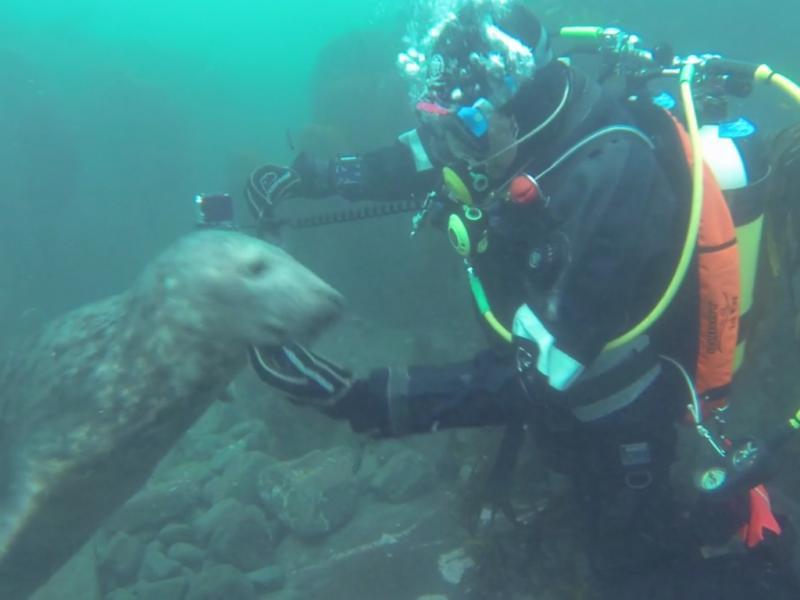 Focas brincam com mergulhadores (Reprodução / Vimeo / Jason Neilus)