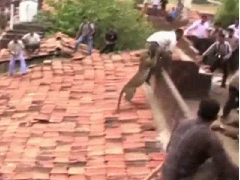 Nádegas de um homem foram alvo da fúria de animal (Foto reprodução de YouTube)