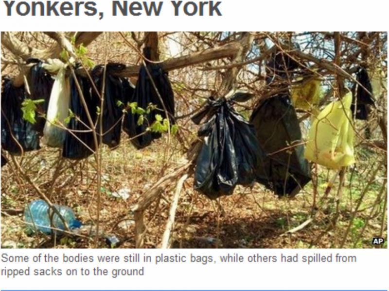 Cerca de 30 gatos foram encontrados dentro de sacos