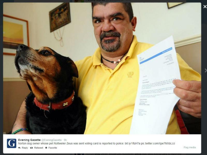 Zeus, o cão que foi convocado para votar (Foto Twitter)