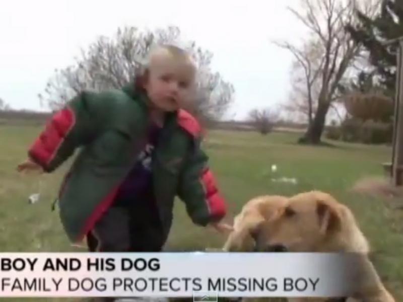 Cão protegeu criança desaparecida (Foto reprodução de YouTube)