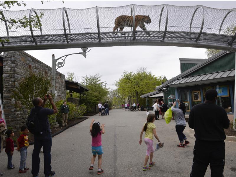 Felinos poderão acompanhar as pessoas ao longo do jardim zoológico de Filadélfia (Reuters)