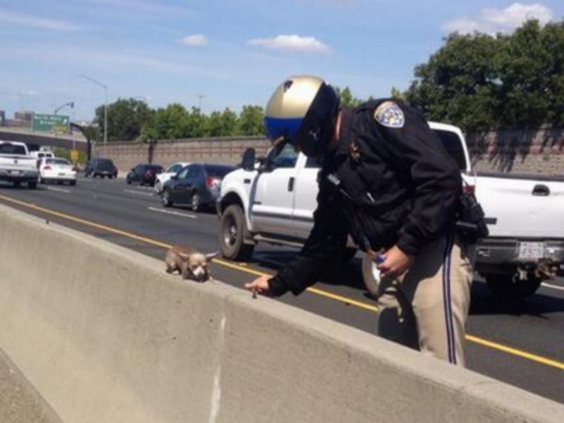 Polícia salva cão abandonado em autoestrada (Reprodução / Twitter / CHP Contra Costa)