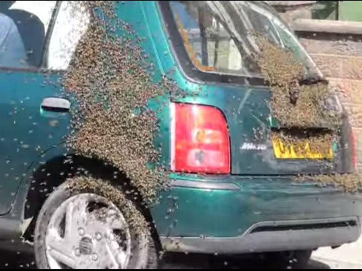 E se um enxame de abelhas tomasse conta do seu carro?