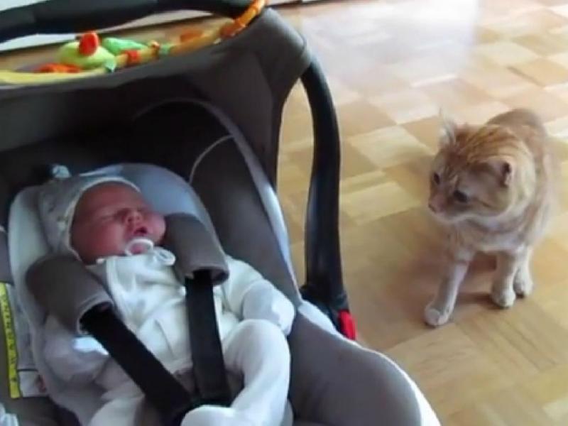 Gato conhece bebé pela primeira vez (YouTube)