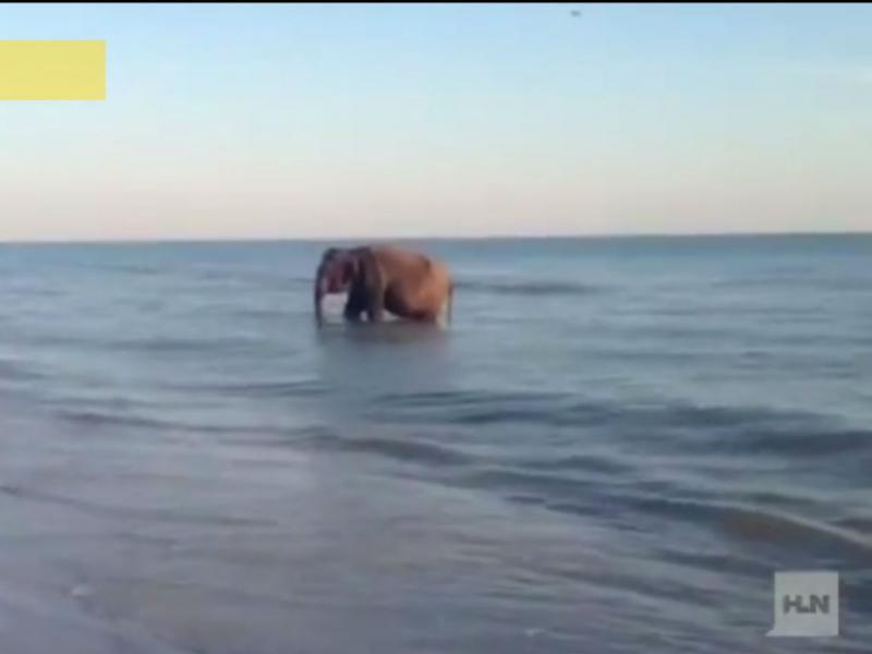 Um elefante a banhos
