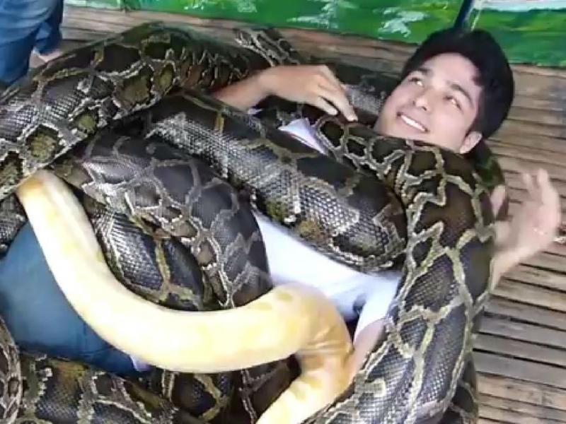 Jardim Zoológico proporciona massagem com cobras (Reprodução YouTube)