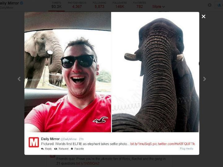A primeira selfie de um elefante