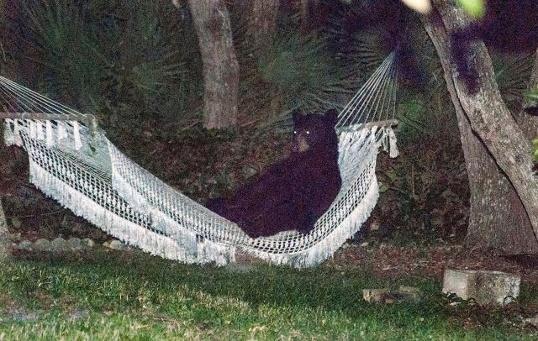 Urso deitado na rede