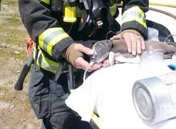 Bombeiro utiliza a mascara de oxigénio para salvar cão