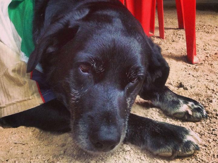 Cão perdido no Uruguai encontra dono no Brasil (Facebook)