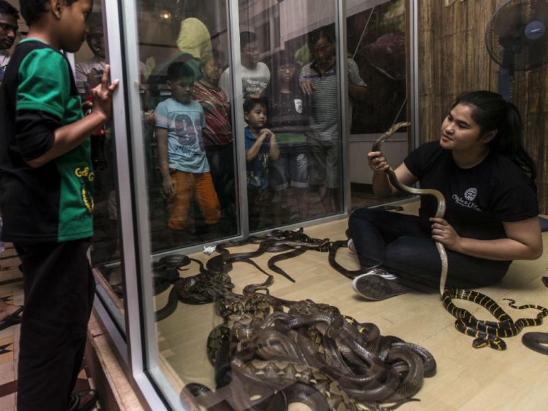 Esta mulher vive com cem cobras (Lusa)