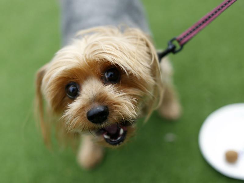 Uma roulotte só para cães (Reuters)
