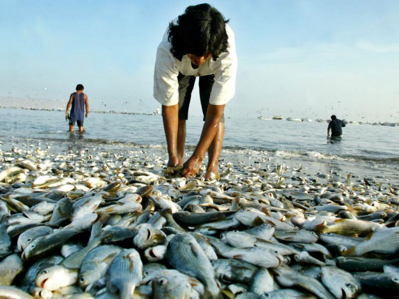 Peixe (REUTERS)